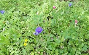 seed heart flowers